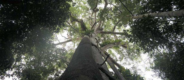 Hutan Adat Imbo Putui, Tantangan dan Harapan [Tulisan 1]