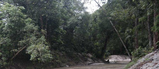 Hutan Adat Imbo Putui, Tantangan dan Harapan [Tulisan 2]