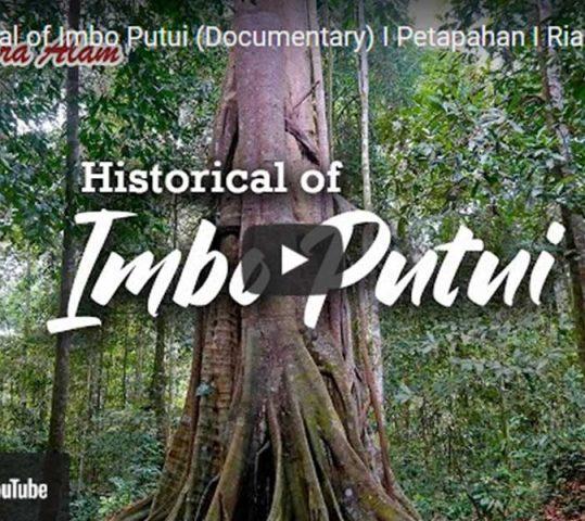 Sekelumit Sejarah Hutan Adat Imbo Putui